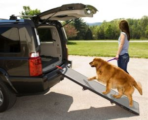 Pet-Gear Tri-Fold Pet Ramp