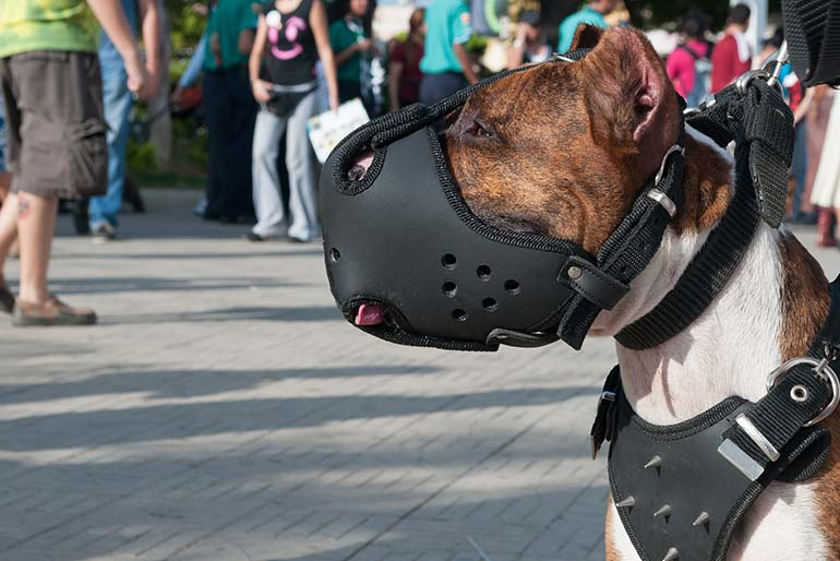 Top 10 Best Dog Muzzles Reviewed in 2017