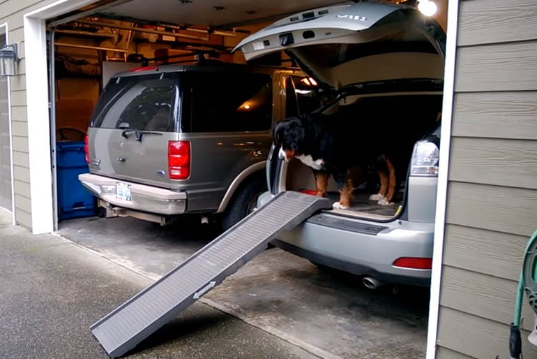 Top 10 Best Dog Ramps Or Dog Steps Reviewed In 2017